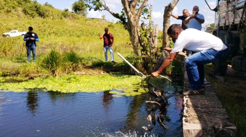 Prefeitura realiza novamente soltura de alevinos e peixes em comunidades do município